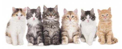 Read this blog post about free kitten giveaways on Everyone Loves Your Money.