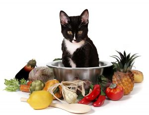 Isn't it about time you started making your own cat food?