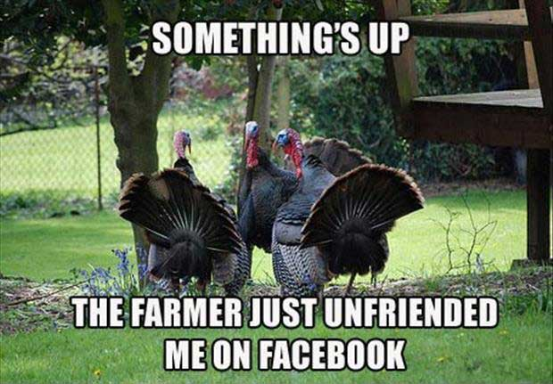 Thanksgiving turkey shopping